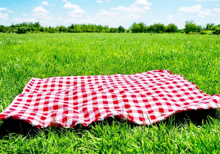 veterans-day-picnic